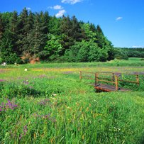 Blooming meadow with walking trail