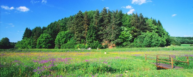 paysage naturel fleurie
